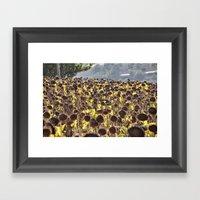 Sunflower 11 Framed Art Print