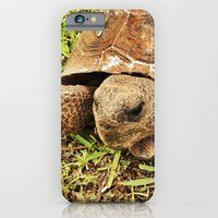iPhone & iPod Case featuring Turtle by Elektrikk