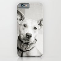 iPhone & iPod Case featuring Shelter Dog Portrait by Kaelyn Ryan Photography