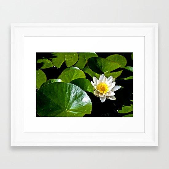 Pond Lilly Framed Art Print