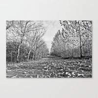 Pathway Through The Tree… Canvas Print