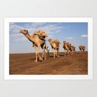 Camel Caravan Art Print