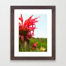 Spiked Red Flower Framed Art Print