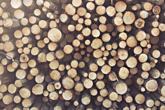 If I wood, wood you? Art Print