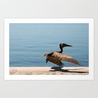 Pelican Take Off  Art Print
