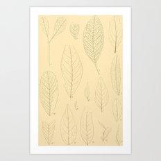 Ex. A Art Print