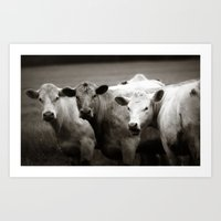 Cow Talk Art Print