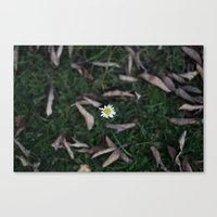 The Lone Flower Canvas Print