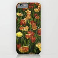 A sea of spring tulips iPhone 6 Slim Case