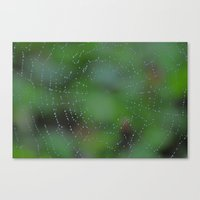 Wet Web Canvas Print