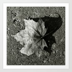 'Maple Leaf' Art Print