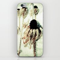 Dying Beauty iPhone & iPod Skin