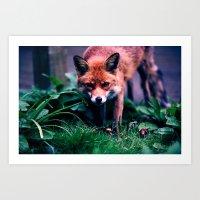 Fox Art Print