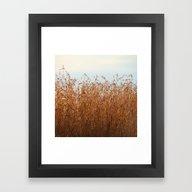 A Bed Of Reeds  Framed Art Print