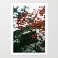 Red Maple Art Print