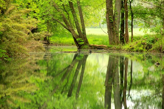Spring Reflections Art Print