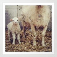 Sheep #2 Art Print