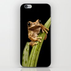 Marbled Tree Frog iPhone & iPod Skin