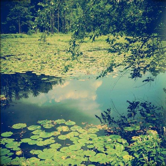 Lily Pad Pond Art Print