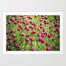 Tulips will remember  Art Print