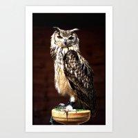 The Batsford Owl Art Print