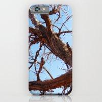iPhone & iPod Case featuring Juniper by Amy K. Nichols