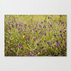Little flowers in a field Canvas Print