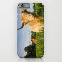 Highland Cattle   iPhone 6 Slim Case