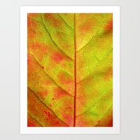 Autumn Colors III Art Print