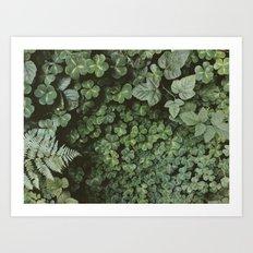 Wood Sorrel Art Print