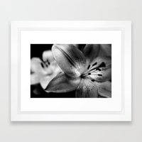 Casablanca Lily Framed Art Print
