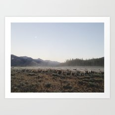Sheep Dust Art Print