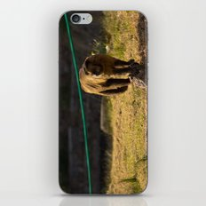 Monkey Business I iPhone & iPod Skin