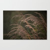 Late in the Summer Canvas Print