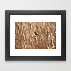 A Sparrow on Catails Framed Art Print