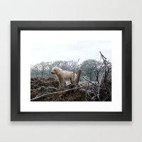 Wilderness Dog Framed Art Print