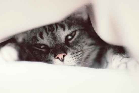 Soft Cat Art Print
