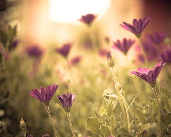Sun in the meadow  Art Print