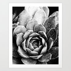 Rainsplashed Cactus Art Print