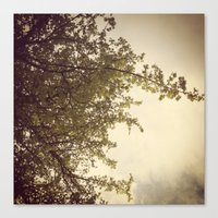Canvas Print featuring Sunlight & Branches by rachellam