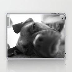 Lazy Dog Laptop & iPad Skin