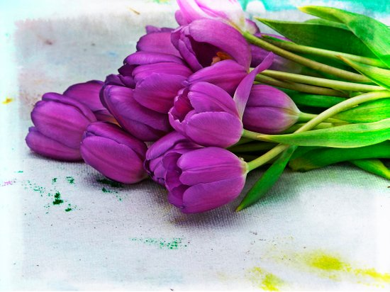Spring Botanical -- Purple Tulips on Dropcloth Art Print