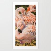 Chilean Flamingos Art Print