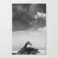 Giraffe Under Overcast Canvas Print