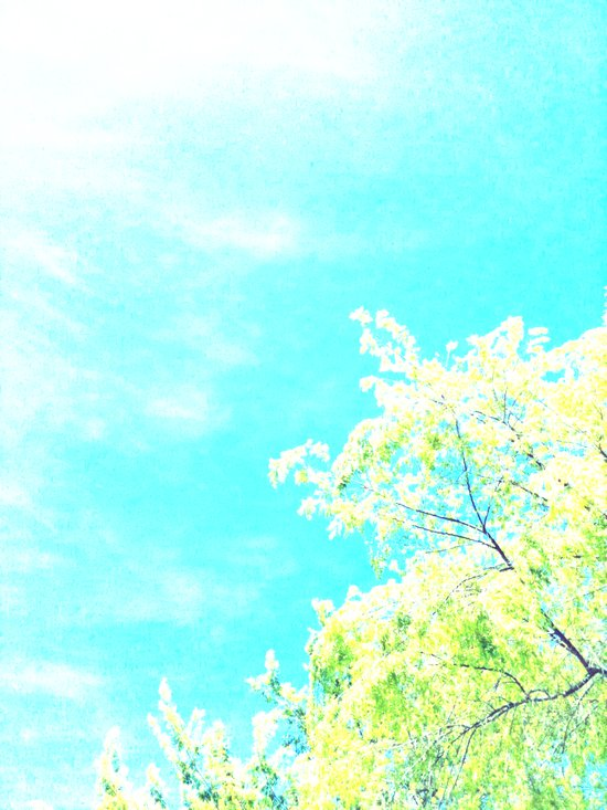 Bright Trees Against Blue Art Print