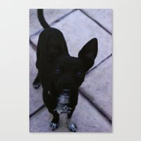 Just Dog  Canvas Print