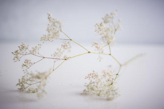 Soft flowers Art Print
