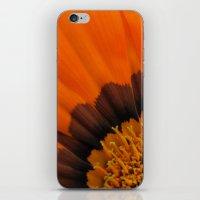 Orange Gazania iPhone & iPod Skin