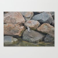 Lone Cat Canvas Print