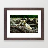 Young Pole Bear Framed Art Print